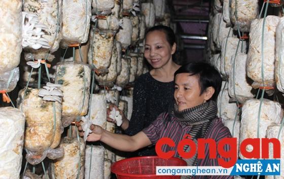 Hoạt động khởi nghiệp bắt đầu bằng những ý tưởng kinh doanh nhỏ, đáp ứng nhu cầu, thị hiếu thị trường (Trong ảnh: Mô hình trồng nấm sạch tại phường Bến Thủy, TP Vinh)