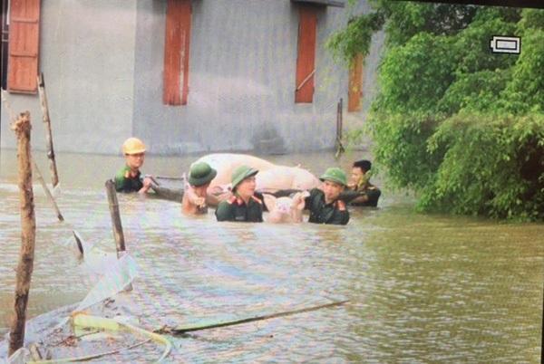 Cán bộ, chiến sỹ Công an huyện Thanh Liêm giúp nhân dân gặt lúa và di chuyển tài sản, gia súc, gia cầm, kịp thời hạn chế thấp nhất thiệt hại do mưa lụt gây ra.